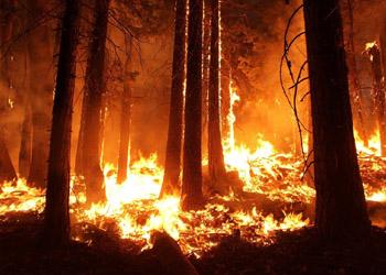 Incendies : le directeur du SDIS13 réclame une justice plus ferme